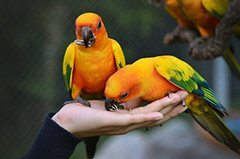 parrot_medium